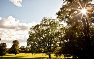 Chawton parkland
