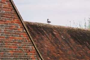 RoofDuck
