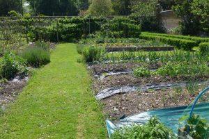 veg garden 3reduced
