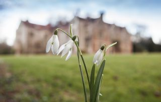 Photo of snowdrops outside Chawton House Library