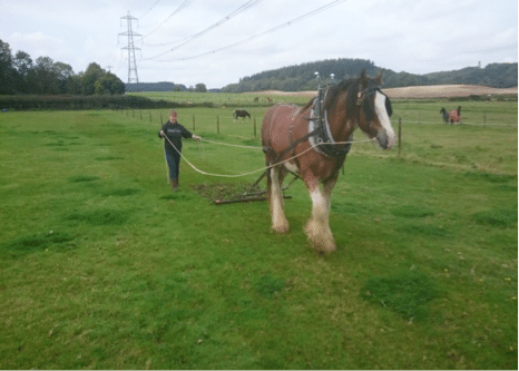 Speedy the Clydesdale