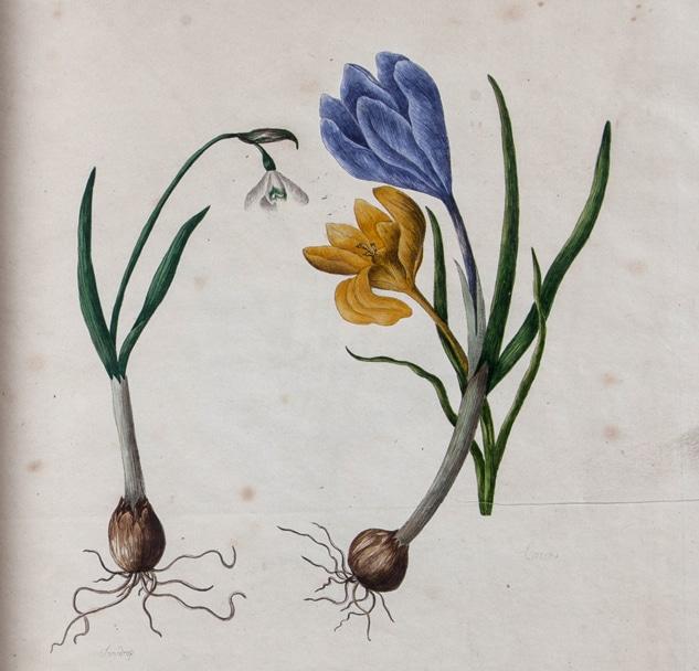 Plant (disambiguation)