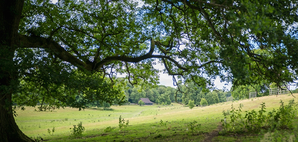 View of Chawton House Parkland with lime trees and barn.